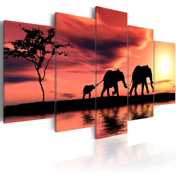 Obraz - Rodzina afrykańskich słoni (100x50 cm) A0-N1548