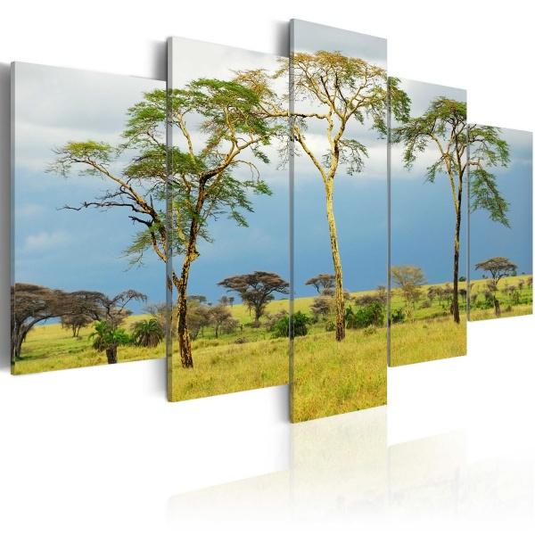 Obraz - Roślinność Afryki (100x50 cm) A0-N1540