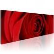 Obraz - Róża północy A0-N1244