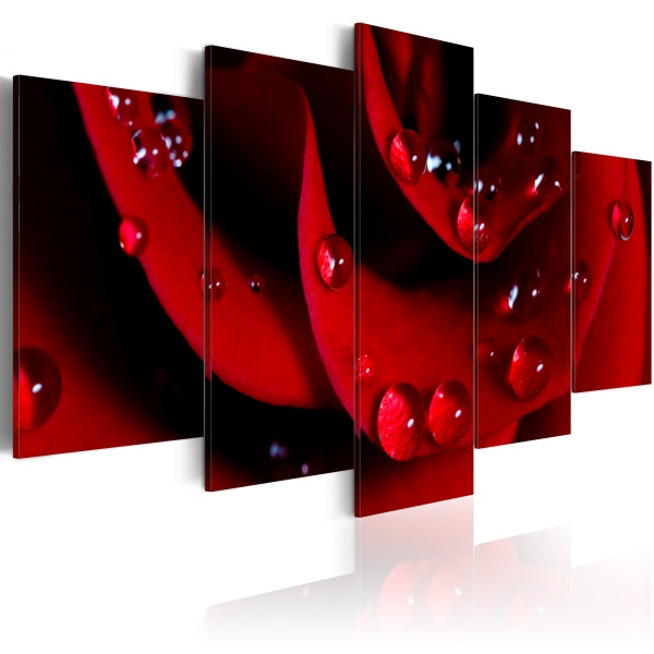 Obraz - Róża z kroplami rosy (100x50 cm) A0-N1415