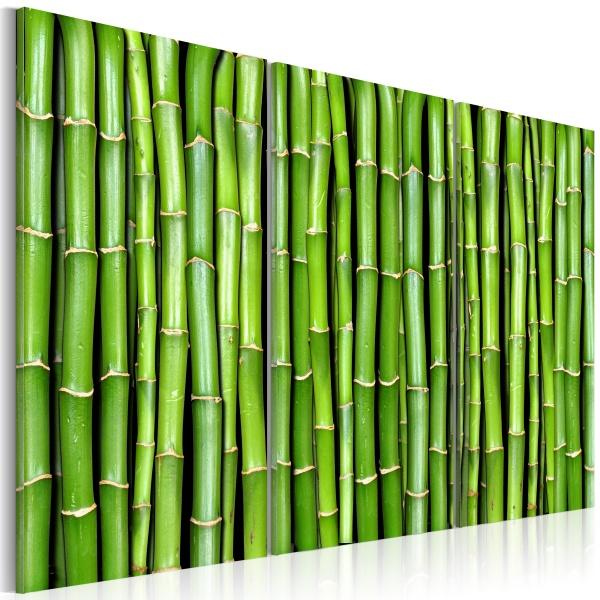Obraz - Ściana z bambusa (60x40 cm) A0-N1368