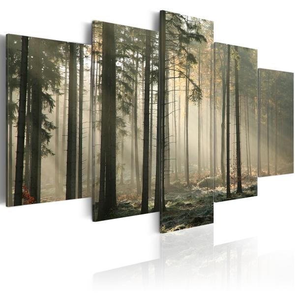 Obraz - Smuga światła w ciemnym lesie (100x50 cm) A0-N1571