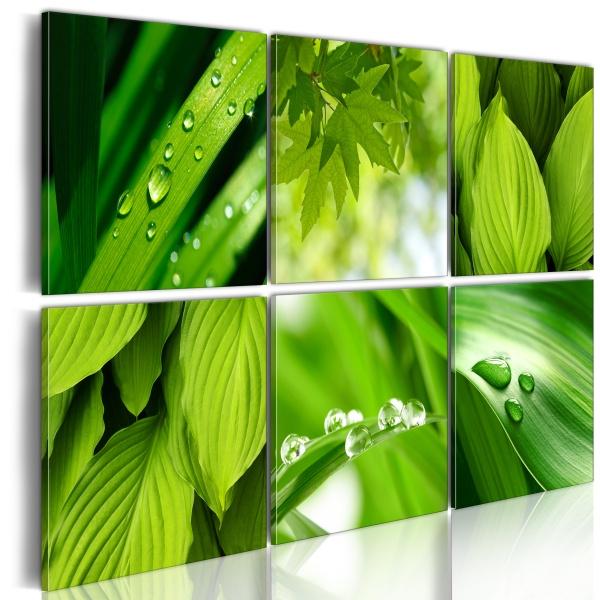 Obraz - Soczysta zieleń liści (60x40 cm) A0-N1605