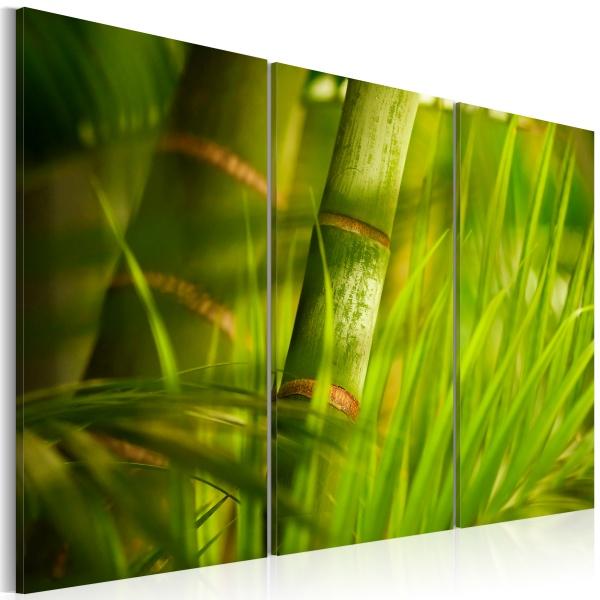 Obraz - Soczysta zieleń tropikalnych traw (60x40 cm) A0-N1592