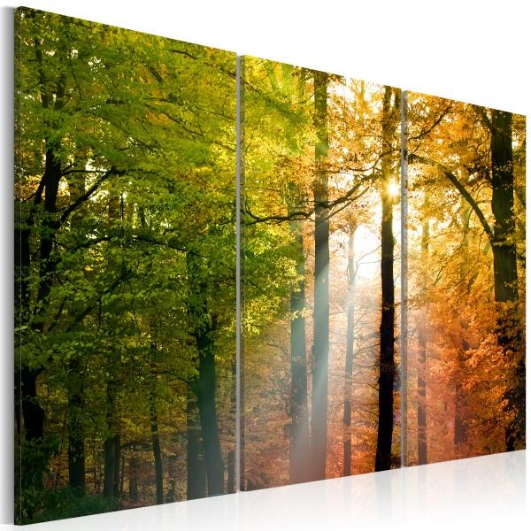 Obraz - Spokojny jesienny las (60x40 cm) A0-N1393