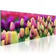 Obraz - Tęczowe tulipany A0-N1241