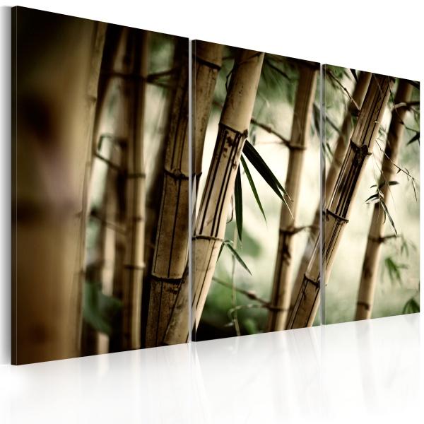 Obraz - W tropikalnym lesie (60x40 cm) A0-N1372