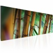 Obraz - Wild bamboos A0-N1246