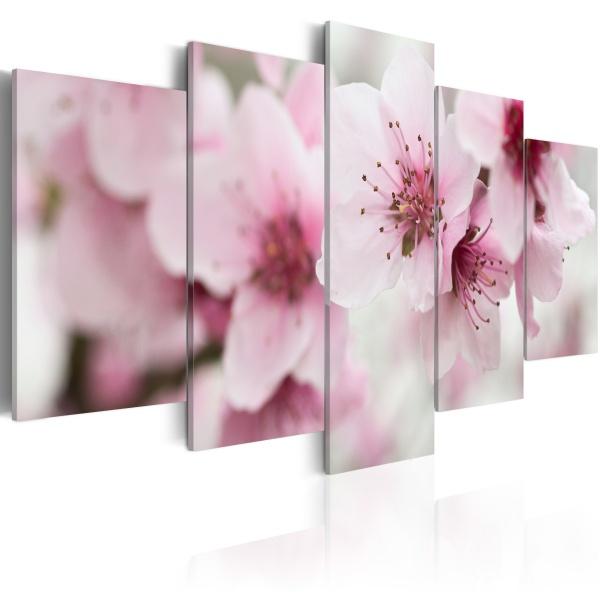 Obraz - Wiśnia - łagodność i piękno (100x50 cm) A0-N1480