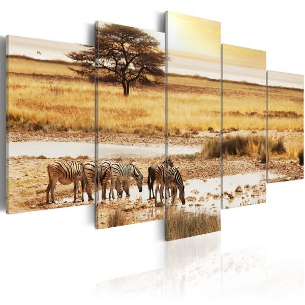 Obraz - Zebry na sawannie (100x50 cm) A0-N1551