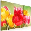 Obraz - Znów zakwitły tulipany... A0-N1085