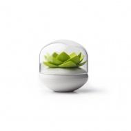Pojemnik na patyczki do uszu Lotus biało-zielony 10157-WH-GN