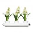 Potrójny wazon na zioła Sagaform SF-5015274