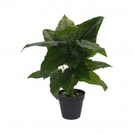 Roślina w donicy II 45cm Intesi